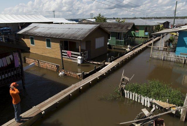 A man is pictured on a makeshift walkway above a flooded street from the rising Rio Solimoes, one of the two main branches of the Amazon River, in Careiro da Varzea of Amazonas State, Brazil, June 30, 2015. (Photo by Bruno Kelly/Reuters)