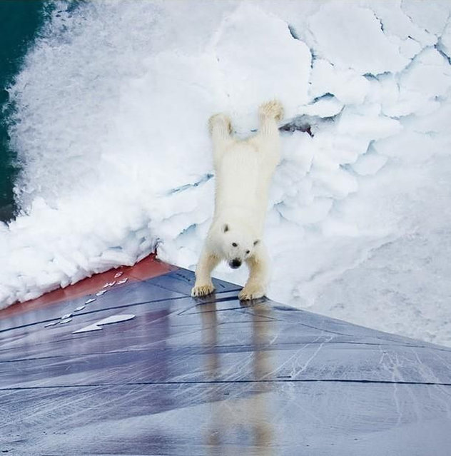 Polar Bear Came To Play
