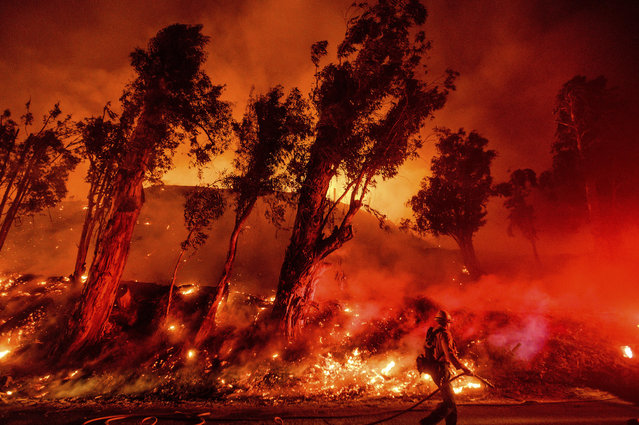Flames from a backfire consume a hillside as firefighters battle the Maria Fire in Santa Paula, Calif., on Friday, November 1, 2019. According to Ventura County Fire Department, the blaze has scorched more than 8,000 acres and destroyed at least two structures. (Photo by Noah Berger/AP Photo)