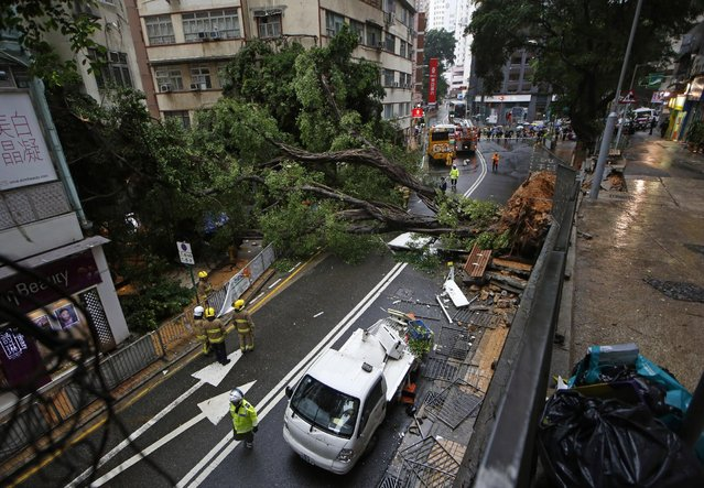 Firemen look at a tree that fell after the Hong Kong Observatory issued an Amber Rainstorm warning in Hong Kong, Wednesday, July 22, 2015. Two people have been sent to the hospital after being hit by a falling tree. (Photo by Kin Cheung/AP Photo)
