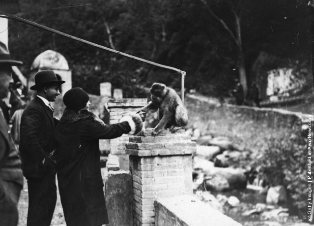 1929: A monkey shakes hands with a woman at the Hotel des Singes in the Atlas Mountains
