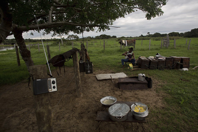 In this May 17, 2017 photo, cook Odair Batista prepares a meal for cowboys in Corumba, in the Pantanal wetlands of Mato Grosso do Sul state, Brazil. Batista cooked yucca and a mix of rice, meat and beans. (Photo by Eraldo Peres/AP Photo)
