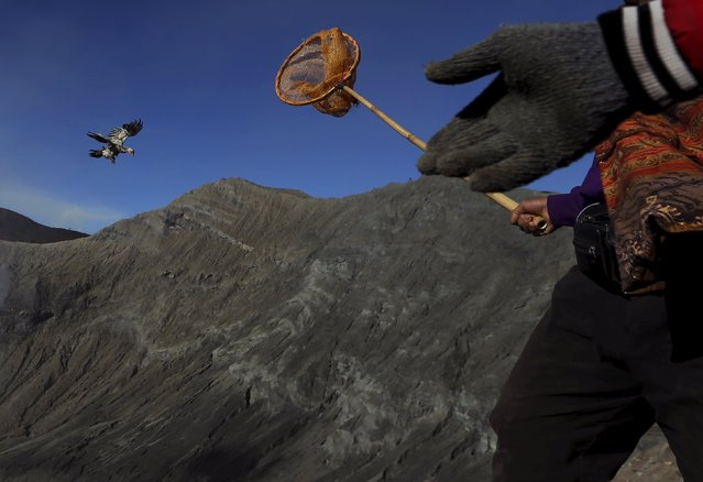 A man holds a net as he tries to catch a chicken after Hindu worshippers threw their offerings during the Kasada Festival into a crater of Mount Bromo in Probolinggo, Indonesia's East Java province, August 1, 2015. (Photo by Reuters/Beawiharta)