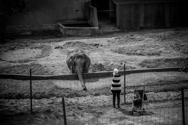Elephant, France, 2016. (Photo by Jo-Anne McArthur/Born Free Foundation/The Guardian)