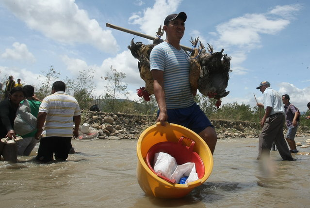 A Colombian man carries live fowl across the Tachira River toward Colombia's community of La Parada, across the border with San Antonio del Tachira, Venezuela, Tuesday, August 25, 2015. (Photo by Efrain Patino/AP Photo)