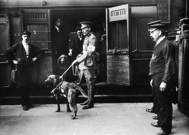 Dog trainer Major Richardson leaves Charing Cross Station with his bloodhounds, to assist the British Red Cross in locating wounded soldiers on the battlefields of World War I, 18th April 1914.