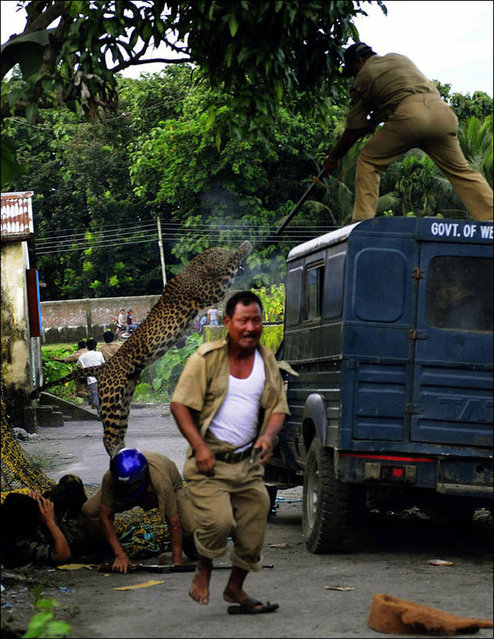 Leopard Attacks Villagers In India