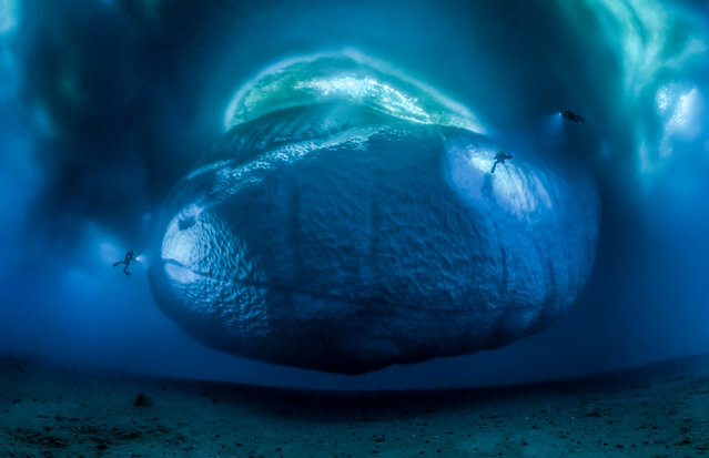 Earth's Environments category. The Ice Monster by Laurent Ballesta, France. Laurent and his expedition team were working out of the Dumont d'Urville scientific base in east Antarctica. Ice shelves in the East Antarctic ice sheet are melting faster than scientists assumed. When Laurent spotted this small iceberg, he saw the chance to show for the first time the underwater part. It took three days to check the location, install a grid of lines from the seabed to buoys (so that Laurent could maintain a definite distance) and take the series of pictures to capture the scene. (Photo by Laurent Ballesta/Wildlife Photographer of the Year 2017)