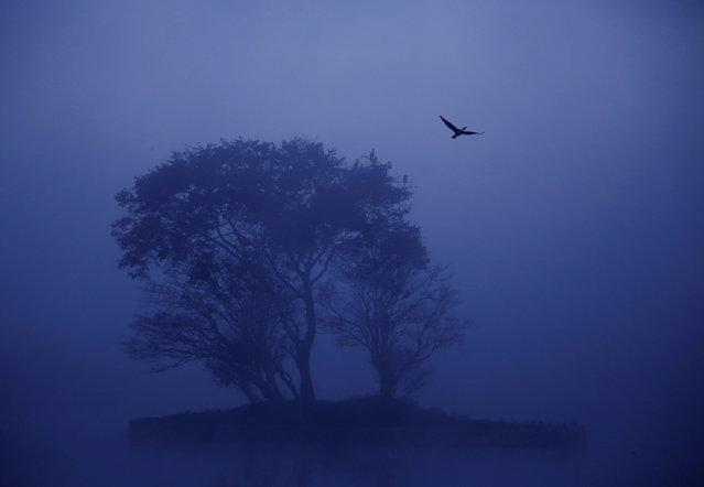 A cormorant takes flight from a tree during a foggy winter morning at Taudaha wetlands in Kathmandu, Nepal December 11, 2017. (Photo by Navesh Chitrakar/Reuters)