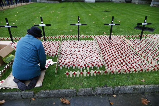 A volunteer plants crosses decorated with poppies in the lawn outside Westminster Abbey in central London, November 3, 2014. Preparations are being made to mark Armistice Day on the centenary of the beginning of the First World War. (Photo by Andrew Winning/Reuters)