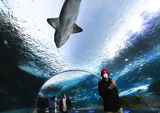 People wear face masks while watching the marine life at Ripley's Aquarium of Canada during the COVID-19 pandemic in Toronto, on Wednesday, October 28, 2020. (Photo by Nathan Denette/The Canadian Press via AP Photo)