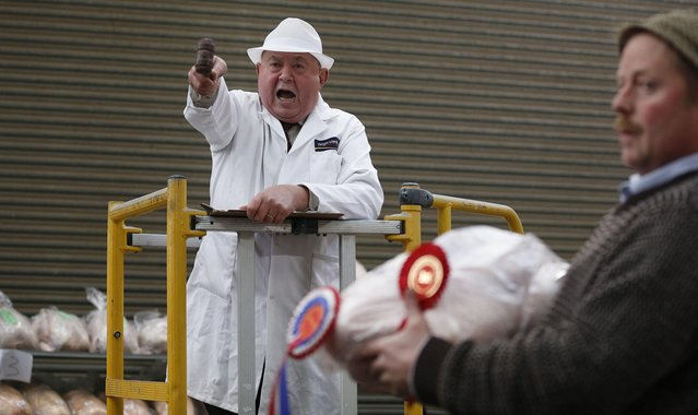 Auctioneer Roy Waller starts the bidding during the Turkey and dressed poultry auction at Chelford Market, northern England December 22, 2014. (Photo by Phil Noble/Reuters)