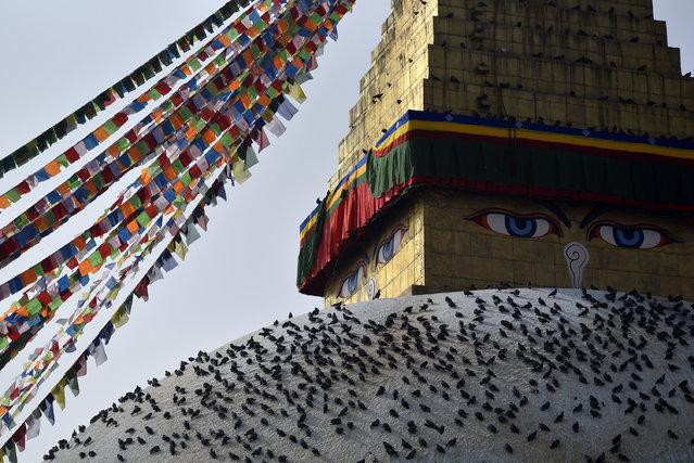 Pigeons seen around the Boudhanath stupa in Kathmandu, Nepal on Wednesday, December 09, 2020. Boudhanath Stupa is listed as a UNESCO heritage site in Kathmandu, Nepal. (Photo by Narayan Maharjan/NurPhoto via Getty Images)
