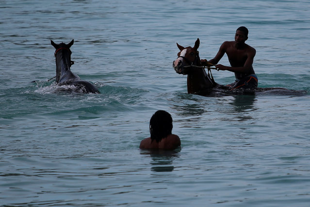 A handler swims with a horse from the Garrison Savannah in the Caribbean Sea near Bridgetown, Barbados December 1, 2016. (Photo by Adrees Latif/Reuters)