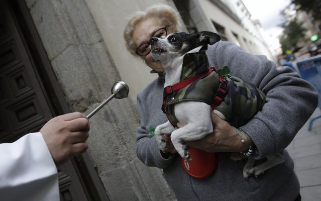 A priest blesses a dog outside Madrid's San Anton Church January 17, 2014. Hundreds of pet owners bring their animals to be blessed every year on the day of San Anton, Spain's patron saint of animals. (Photo by Andrea Comas/Reuters)