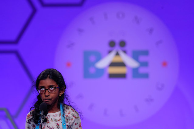 Nithika Rangan of Elk Grove, California concentrates as she spells during the third round of the 92nd annual Scripps National Spelling Bee in National Harbor, Maryland, U.S., May 28, 2019. (Photo by Aaron P. Bernstein/Reuters)