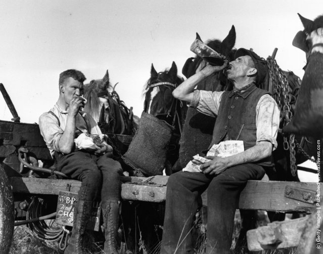 1937: Loggers and their horses enjoying a lunchtime feed during tree felling at Scattersdells Wood, King's Langley, Hertfordshire