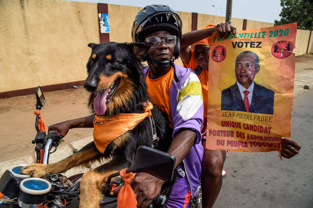 Supporters of Togo's major opposition candidate of the National Alliance for Change (ANC) party Jean-Pierre Fabre ride with a dog on a motorcycle during the last election rally of the campaign in Lome on February 20, 2020. Opposition leader Jean-Pierre Fabre has intensified campaign ahead of February 22 election to defeat incumbent President Faure Gnassingbe whose family has been ruling Togo since over five decades, yet is seeking re-election for the fourth term despite widespread protests by the opposition calling for the end of his family's decades-long grip on power. (Photo by Pius Utomi Ekpei/AFP Photo)