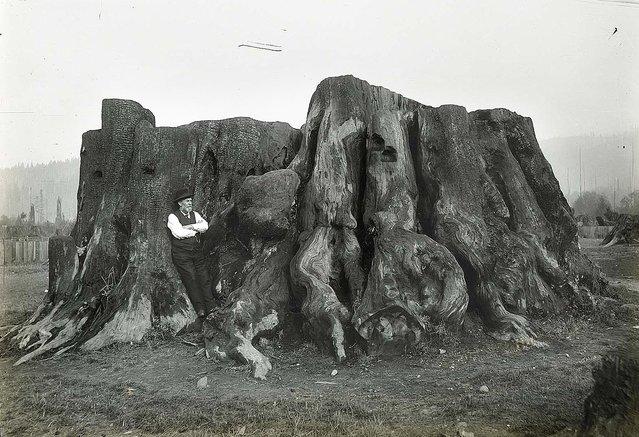 Lumberjacks From California