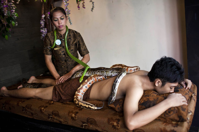 Members of staff demonstrate a form of massage using pythons at Bali Heritage Reflexology and Spa on October 27, 2013 in Jakarta, Indonesia. (Photo by Ulet Ifansasti/Getty Images)
