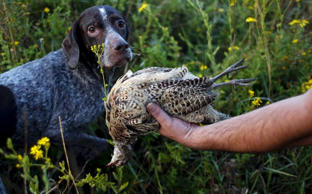 "A hunter holds a shot female pheasant next to his dog ""Lola"", a Deutsch female Kurzhaar, during the first day of the Italy hunting season in Castell'Azzara, Tuscany, central Italy, September 20, 2015. (Photo by Max Rossi/Reuters)"