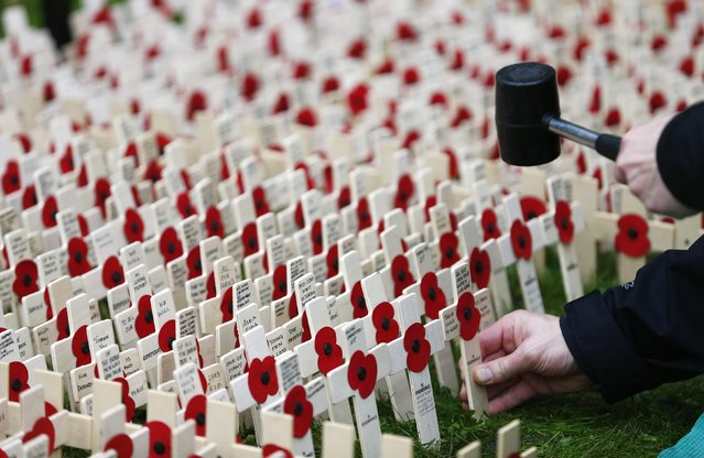 A volunteer plants crosses decorated with poppies in the lawn outside Westminster Abbey in central London, November 3, 2014. (Photo by Andrew Winning/Reuters)
