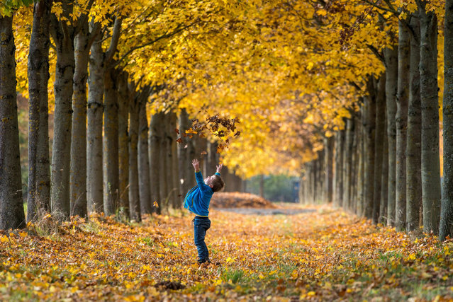 A photograph made avaialble on 24 October 2015 showing a young boy playing amongst the autumn leaves in a tree lined avenue in Straubing, southern Germany 23 October 2015. (Photo by Armin Weigel/EPA)