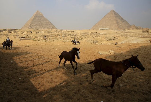 Horses run in front of workers as they are wait for tourists at the Giza pyramids on the outskirts of Cairo, Egypt, November 8, 2015. (Photo by Amr Abdallah Dalsh/Reuters)