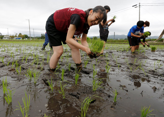 Tourists from Tokyo's universities, plant rice seedlings in a paddy field, near Tokyo Electric Power Co's (TEPCO) tsunami-crippled Fukushima Daiichi nuclear power plant, during a rice planting event in Namie town, Fukushima prefecture, Japan May 19, 2018. (Photo by Toru Hanai/Reuters)