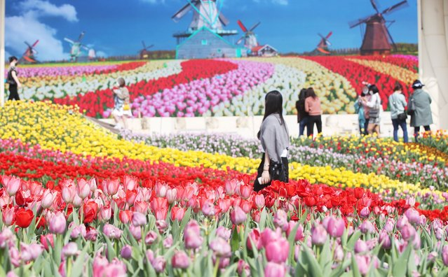 People walk through a field of tulips in full bloom at the Everland amusement park in Yongin, south of Seoul, South Korea, 26 March 2021. (Photo by Yonhap/EPA/EFE)
