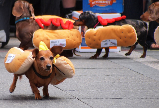 2013 Running of the Wieners