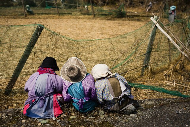 Scarecrows sit in at the edge of a field in the mountain village of Nagoro on Shikoku Island in southern Japan February 24, 2015. (Photo by Thomas Peter/Reuters)