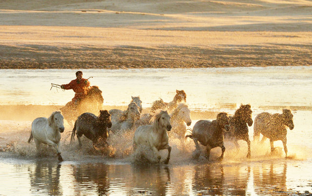 Horses gallop across Wulan Butong grassland in the Inner Mongolia Autonomous Region, China on October 3, 2018. (Photo by Xinhua News Agency/Barcroft Images)