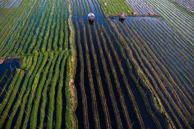 This aerial photo taken from a hot air balloon shows vegetable plantations and traditional houses on stilts on Inle lake in Shan State, Myanmar is seen on February 18, 2019. (Photo by Ye Aung Thu/AFP Photo)