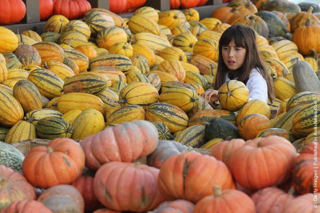Festival pumpkins