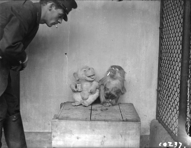 1928:  Zookeeper John Wilkie has a cigarette break with a caged monkey and its stuffed companion