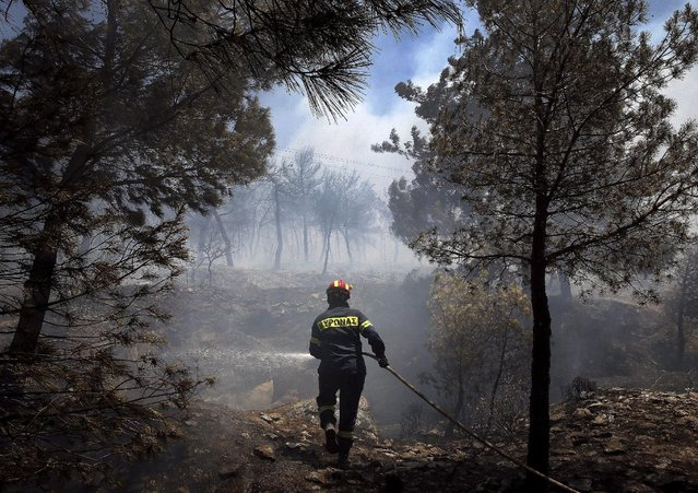 Firefighter sprays water to extinguish a forest fire in an Athens neighborhood July 17, 2015. (Photo by Yannis Behrakis/Reuters)