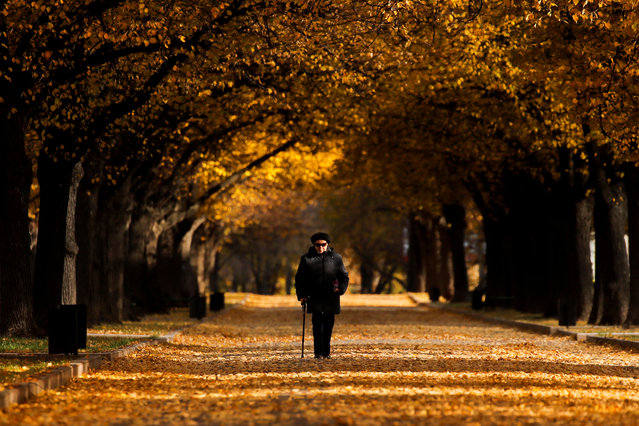 A woman walks under the trees with autumn coloured leaves in Moscow, Russia on October 8, 2019. (Photo by Maxim Shemetov/Reuters)
