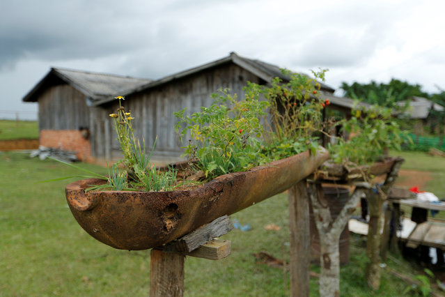 A bomb dropped by the U.S. Air Force planes during the Vietnam War is used to grow plants in the village of Ban Napia in Xieng Khouang province, Laos September 3, 2016. (Photo by Jorge Silva/Reuters)