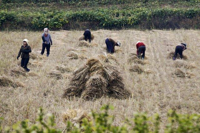 People work in a field just outside Pyongyang, North Korea October 8, 2015. (Photo by Damir Sagolj/Reuters)