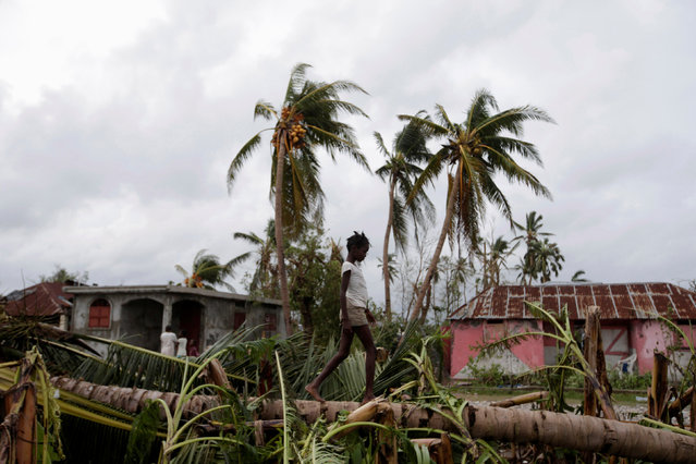 A girl walks on a tree damaged by Hurricane Matthew in Les Cayes, Haiti, October 5, 2016. (Photo by Andres Martinez Casares/Reuters)