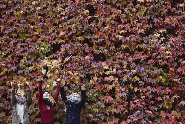 Women enjoy themselves in the autumn foliage in central London, November 7, 2015. (Photo by Toby Melville/Reuters)