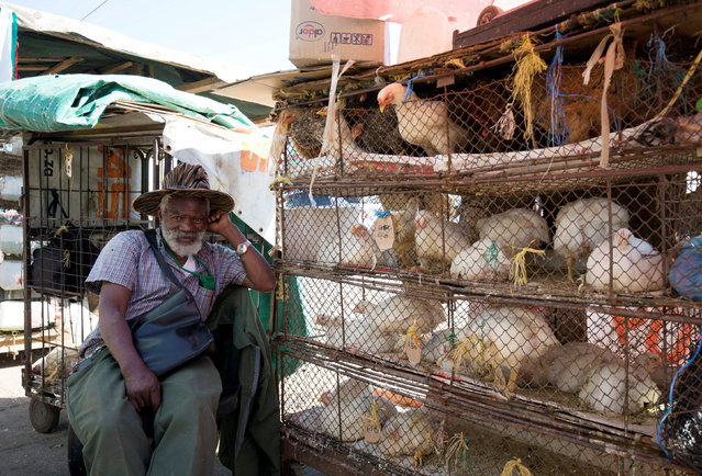 A street trader sells live chickens on a street in Pietermaritzburg, South Africa May 21, 2017. (Photo by Rogan Ward/Reuters)