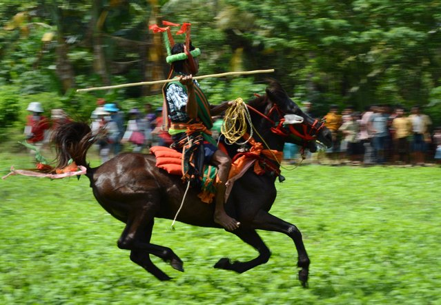 """In this photograph taken on March 22, 2014, a Sumbanese tribesman participates in the annual """"pasola"""" festival, a ritual mock battle on horseback in Ratenggaro village located in Indonesia's island of Sumba. Two teams of tribesmen on horseback charge at each other hurling bamboo spears in a thousand-year-old ritual on the Indonesian island of Sumba aimed at producing a prosperous rice harvest. Spectators, their mouths reddened from chewing betel nut, scream them on from the sidelines of the show in Ratenggaro village, reaching for their machetes when a rider is struck at close range and the referee calls foul play. (Photo by Romeo Gacad/AFP Photo)"""