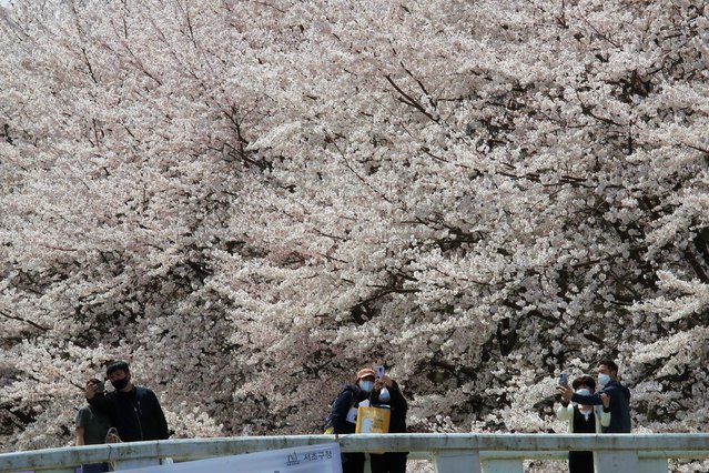 People wearing face masks to protect help against the spread of the coronavirus take pictures under cherry blossoms in full bloom at a park in Seoul, South Korea, Thursday, April 1, 2021. (Photo by Ahn Young-joon/AP Photo)