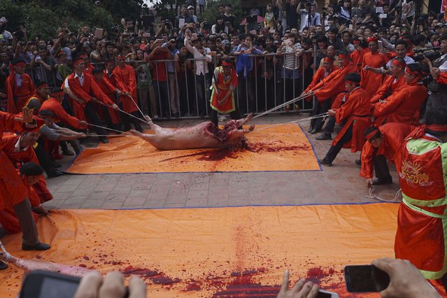 A participant hacks a pig with a sword during a festival at the Nem Thuong village in Bac Ninh, north of Hanoi, in this February 24, 2015 handout picture. (Photo by Reuters/Kham)