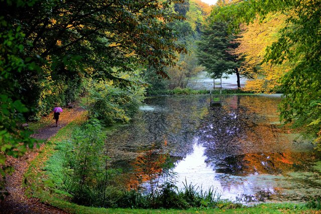 Trees with autumn colored leaves reflect in a pond in Goslar, northwestern Germany, on Oktober 13, 2013. (Photo by Peter Steffen/AFP Photo)