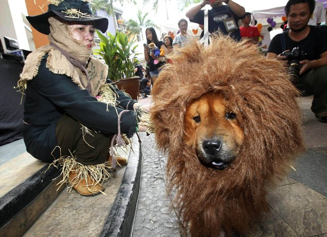 A pet owner sits next to her dog which is dressed in a lion costume during the Scaredy Cats and Dogs Halloween costume competition at Eastwood mall in Quezon city, metro Manila October 26, 2013. According to an official from the organiser Philippine Animal Welfare Society (PAWS), the annual event, which had at least one hundred competitors who joined with their pets, aimed to give pet owners a chance to bond with their pets and experience Halloween together. (Photo by Romeo Ranoco/Reuters)