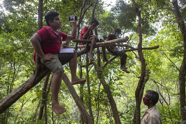 Sri Lankan children sits on tree branches as they access their online lessons from a forest reserve in their village in Bibila, Sri Lanka, July 2, 2021. (Photo by Eranga Jayawardena/AP Photo)