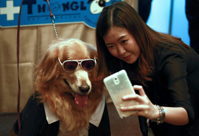A Thai woman uses a smartphone to take a selfie photograph with a Golden Retriever dog during the Pet Expo Thailand 2015 press conference in Bangkok, Thailand, 11 May 2015. (Photo by Rungroj Yongrit/EPA)